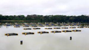 Tanques rede no Rio Corrente