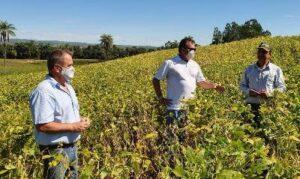 Assim como o Brasil, Minas Gerais vem registrando aumento na produção de soja (Foto: Emater).