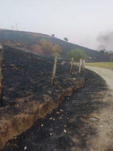 Fazenda perde toda área de pastagem depois de incêndio, em Governador Valadares. (Foto: Washington Bonifácio)