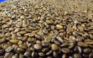 Sacas de cafés premiados chegam a ser vendidas por 15 mil reais. (Foto: Washington Bonifácio)
