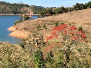 A proposta é fazer um modelo de restauração do solo não tradicional para enriquecimento das espécies e melhoria no solo (Foto: André Amado).