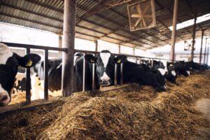 Planejamento alimentar pode ajudar produtor a driblar prejuízos. (Foto: Freepik)