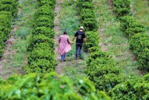 Programa quer incentivar turismo rural em Minas. (Foto: Emater-MG)
