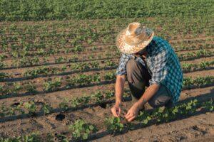 Evento vai discutir experiências de agricultura sustentável. (Foto: Mapa)